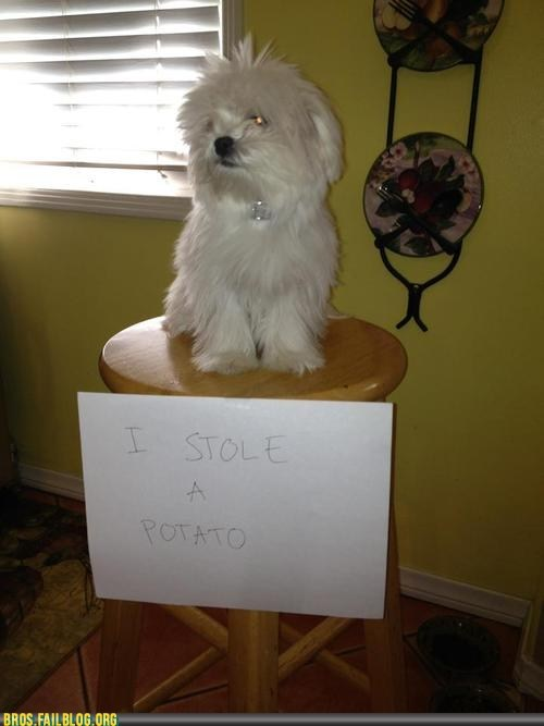 Manimals: No! BAD Bro! That's MY Brotato!