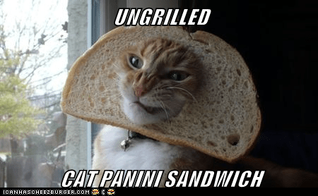 UNGRILLED  CAT PANINI SANDWICH