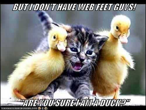 "BUT I DON'T HAVE WEB FEET GUYS!  ""ARE YOU SURE I AM A DUCK?"""