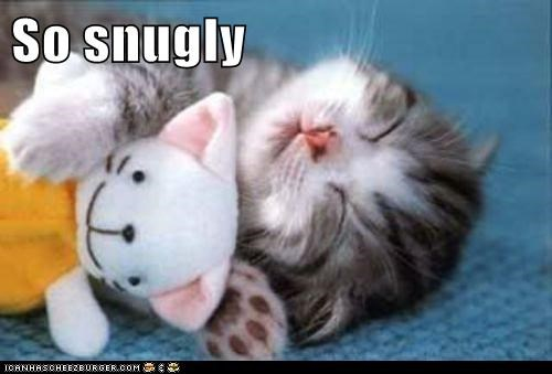 captions,Cats,cozy,dream,friend,Plush,sleep,snuggly