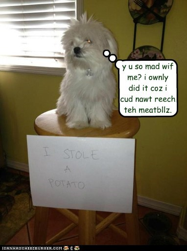 y u so mad wif me? i ownly  did it coz i  cud nawt reech  teh meatbllz.
