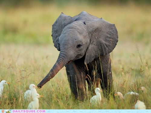 squee,elephant,egret,bird,duck duck goose,game,baby