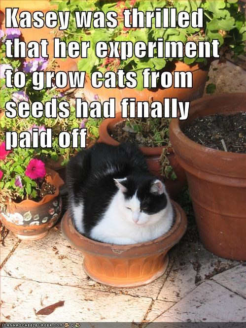 Kasey was thrilled that her experiment to grow cats from seeds had finally paid off