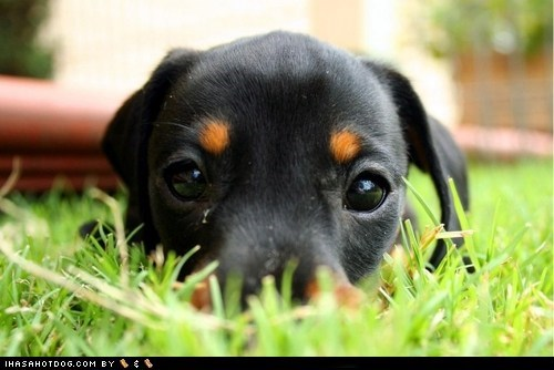 Cyoot Puppy ob teh Day: Hiding in the Grass