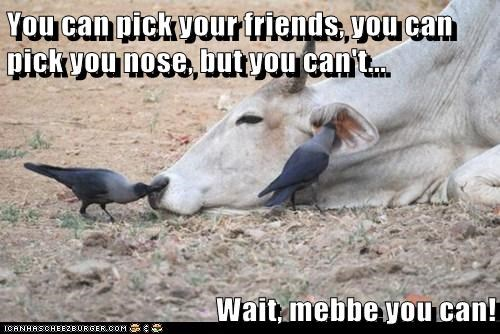 cows,crows,epiphany,friends,maybe,nose,picking,saying,wait a minute