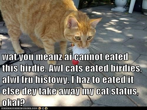 wat you meanz ai cannot eated this birdie. Awl cats eated birdies, alwl fru histowy. I haz to eated it else dey take away my cat status, okai?