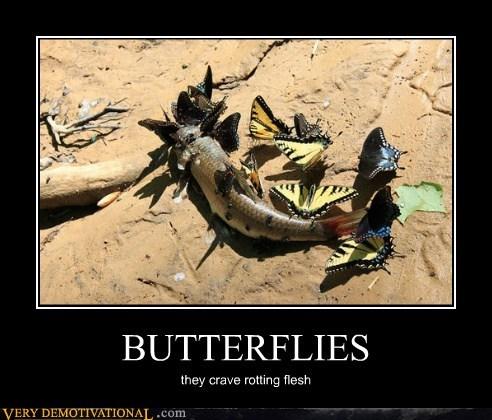 butterflies,fish,rotting flesh,Terrifying