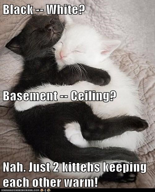 Black -- White? Basement -- Ceiling? Nah. Just 2 kittehs keeping each other warm!