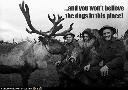 cold,deer,pet,reindeer,soldiers