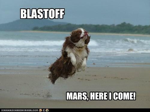 beach,blast off,dogs,Mars,NASA news,space,spaniel