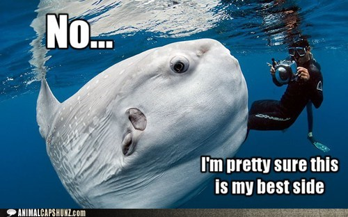 good side,persuasive,photography,pretty sure,ridiculously photogenic,sunfish