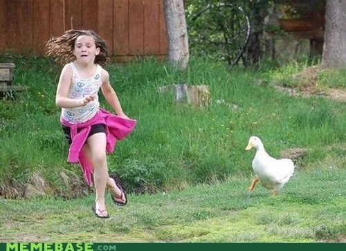 animal,Animal Bomb,duck,kids,run