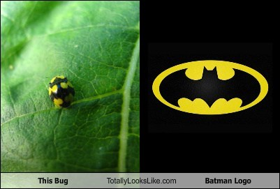 This Bug Totally Looks Like Batman Logo