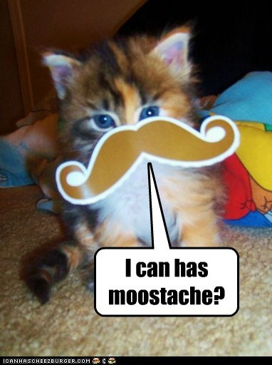 I can has moostache?