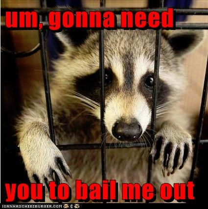 bail out,cage,jail,locked up,long story,please,raccoon