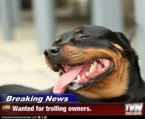 Breaking News - Wanted for trolling owners.