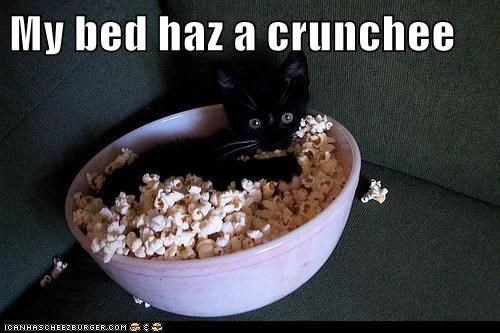 bed,bowl,captions,Cats,crunchy,Movie,Popcorn,snack