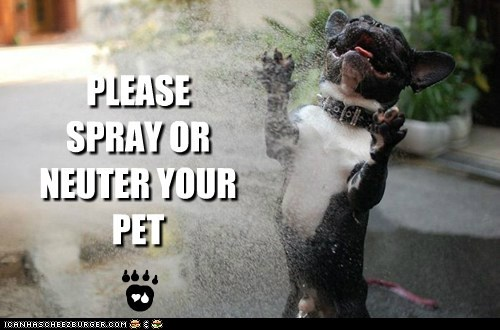 A message from the Hoomane Society and Dogs Against Summer Heat