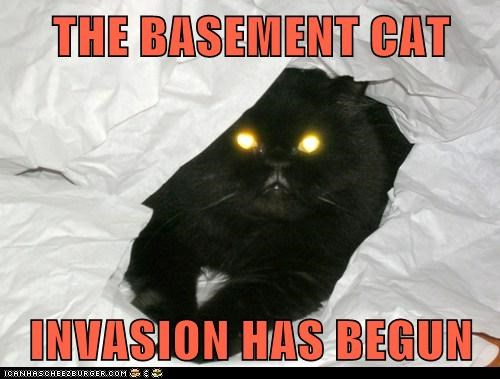THE BASEMENT CAT   INVASION HAS BEGUN