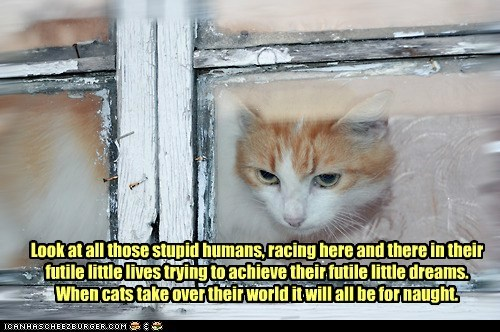 Lolcats: Though we may race them just to amuse us.