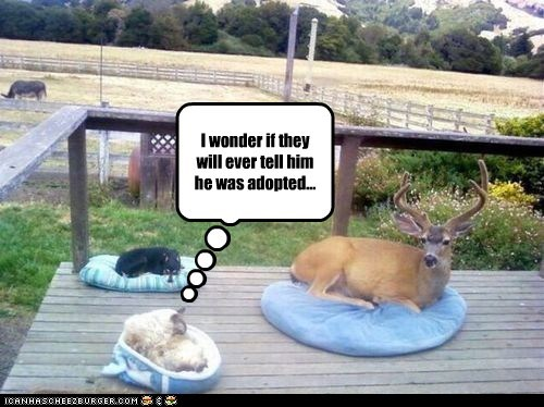 adopted,captions,Cats,deer,parents,surprise