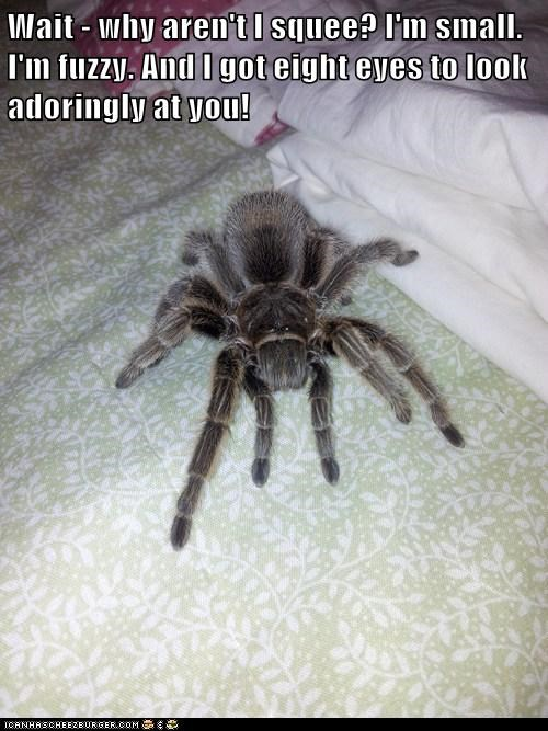 adorable,bed,cute,fuzzy,scary,small,spider,squee,tarantula