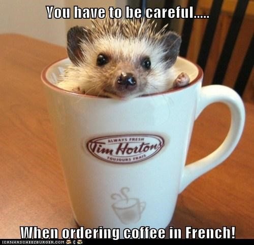 coffee cup,french,hedgehog,mistake,ordering,tim hortons