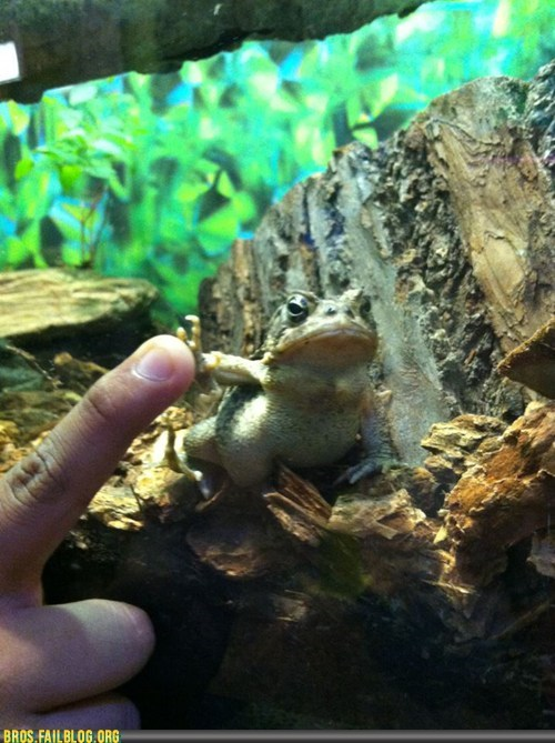Manimals: Toadfist!
