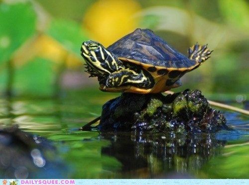 baby,reptile,shell,turtle,stretching,yoga