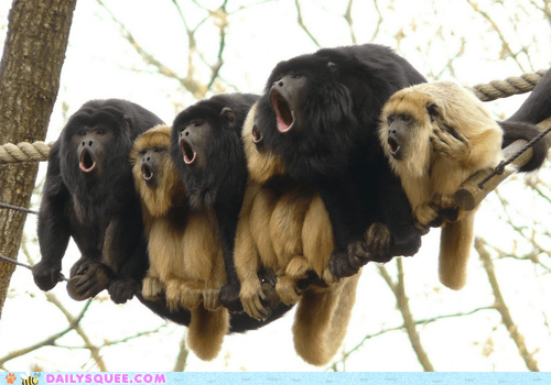 squee,monkey,singing,screaming,tails,musical theater,howler,colobus