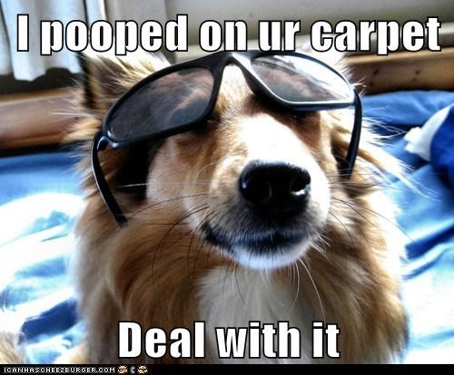 I pooped on ur carpet  Deal with it