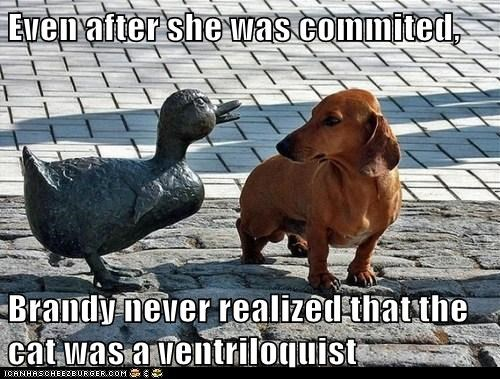 Even after she was commited,  Brandy never realized that the cat was a ventriloquist