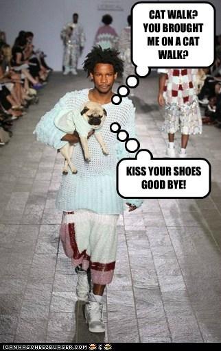 cat walk,dogs,model,pug,revenge,runway fashion,shoes
