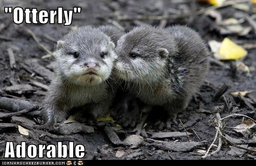 """Otterly""  Adorable"