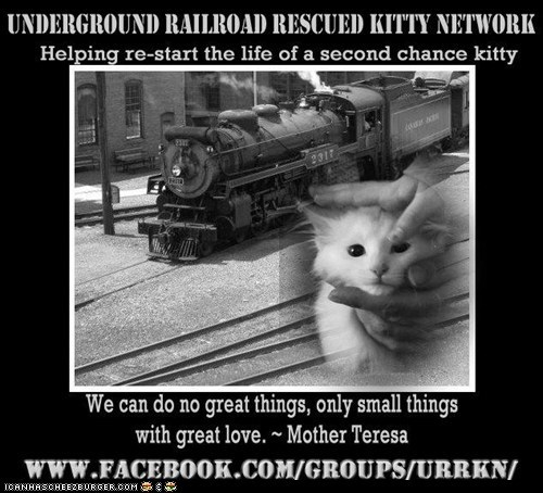 Lolcats: The Underground Railroad Rescued Kitty Network