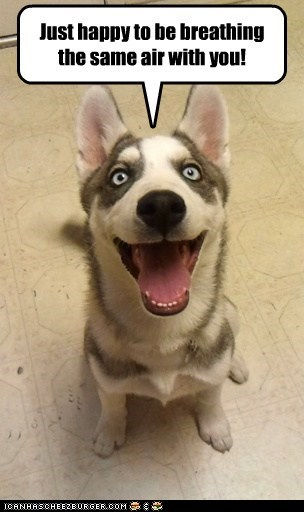 air,breathing,dogs,happy,husky,smile