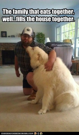 big,captions,dogs,eating,fat,Fluffy,man,what breed,white