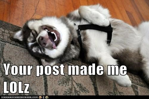 dogs,Fluffy,huskie,husky,laughing,lol,rofl