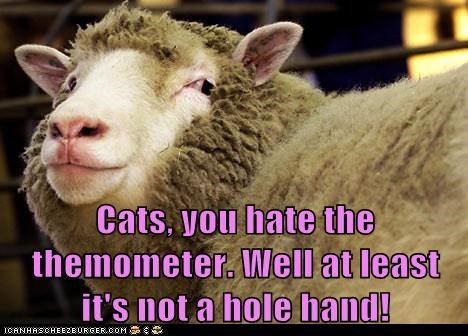 Cats, you hate the themometer. Well at least it's not a hole hand!