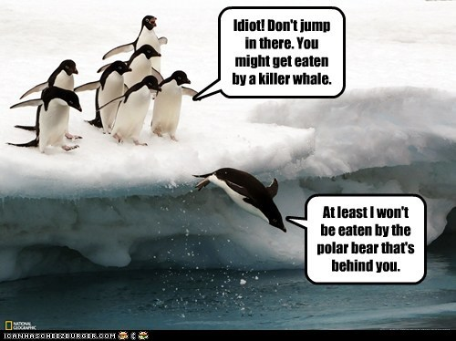 behind you,escape,idiot,jumping,killer whale,penguins,polar bear