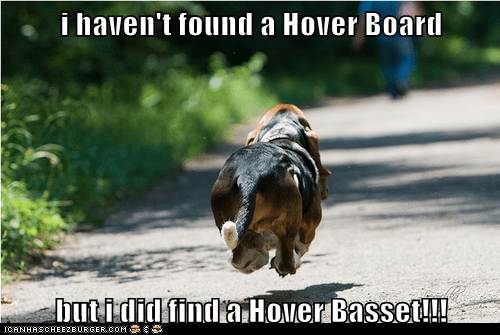 i haven't found a Hover Board  but i did find a Hover Basset!!!