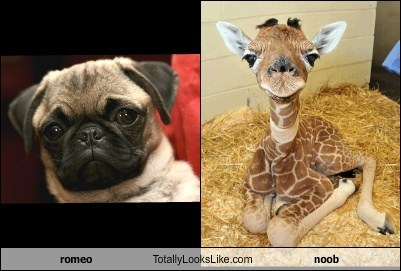 romeo Totally Looks Like noob