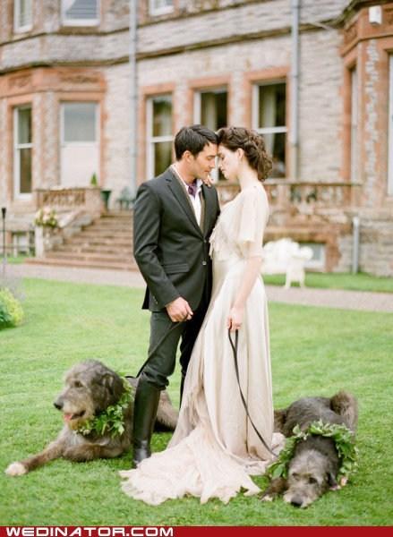 bride,dogs,funny wedding photos,groom,ivy