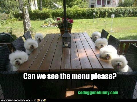 Can we see the menu please?