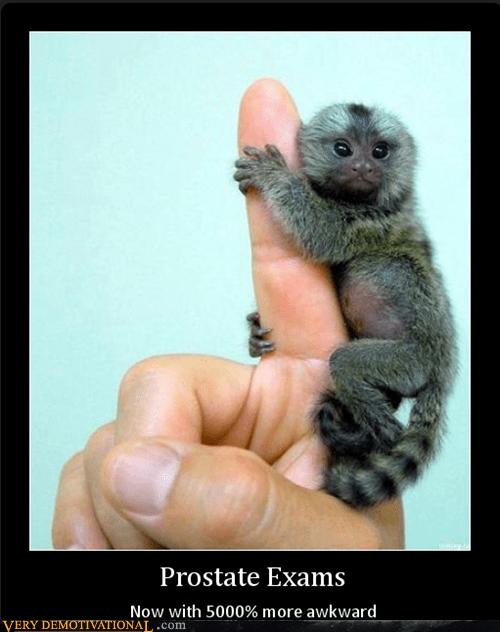 exam,hilarious,monkey,prostate,tiny