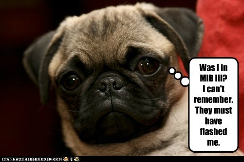 cant-remember,dogs,flash,memory,Men In Black 3,MIBIII,pug