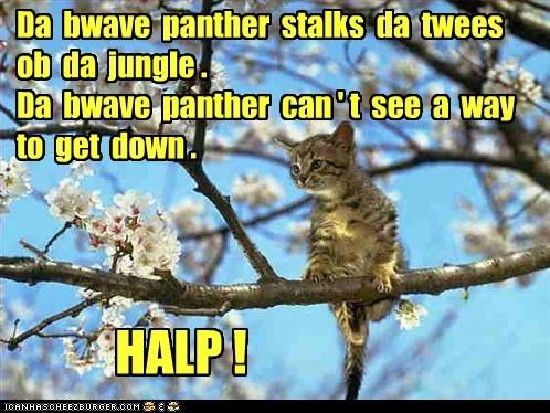 Sez da bwave panther.