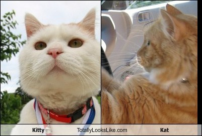 Kitty Totally Looks Like Kat