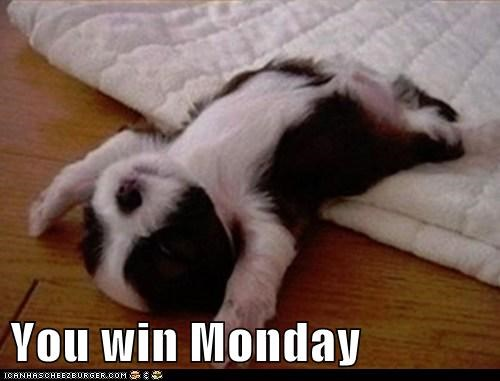 belly up,Case Of The Mondays,dogs,give up,monday,puppy,what breed