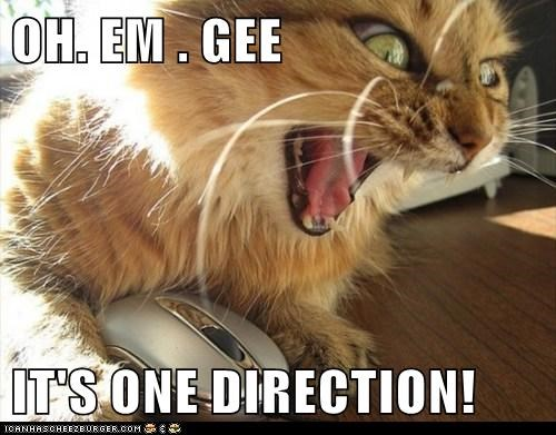 OH. EM . GEE  IT'S ONE DIRECTION!